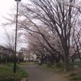 桜2009-01